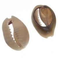 Cowrie Muschelperle, oval, Rückseite flach, ca. 16 x 10 mm