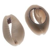 Cowrie Muschelperle, oval, Rückseite flach, ca. 20 x 14 mm